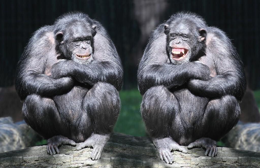 laughing animal wallpaper - photo #18