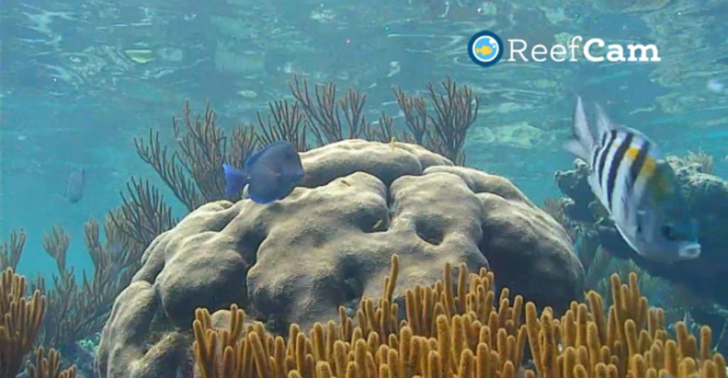 ReefCam Cayman