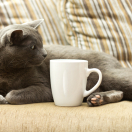 Cats With Your Coffee? What Entrepreneurs Can Learn From Purringtons Cat Cafe