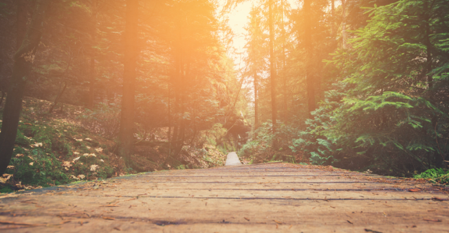 Sunlit forest path; entrepreneurship destination concept