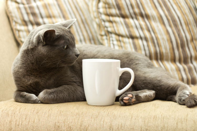 what entrepreneurs can learn from purringtons cat cafe